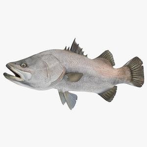barramundi fish rigged 3D