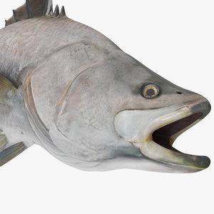 3D barramundi fish rigged model