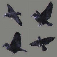 3D animation crow