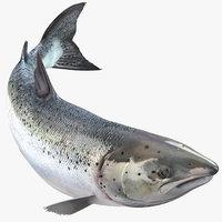 Atlantic Salmon Fish Rigged for Maya