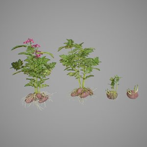 3D photorealistic potato tuber set