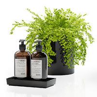 Maidenhair ferns with decor set for bathroom