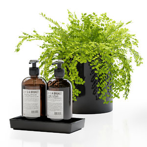 maidenhair ferns decor set 3D model