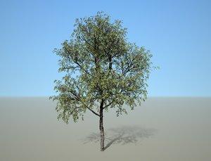 3D broadleaf tree