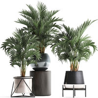 Collection of decorative palm trees in pots for home 422