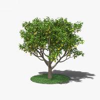3D model lemon tree