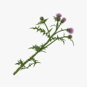 3D model flowers plant nature
