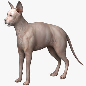 cat sphynx 3D