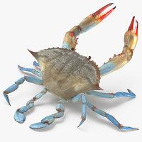 3D atlantic blue crab rigged