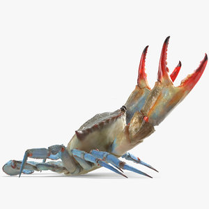 3D atlantic blue crab rigged model