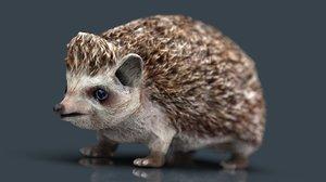 hedgehog animal garden model