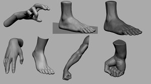 hand foot anatomy 3D model