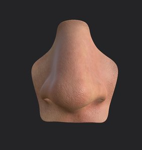 nose anatomy head 3D model