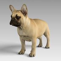 3D french bulldog