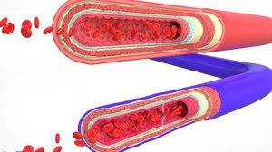 3D blood vessels anatomy 4k