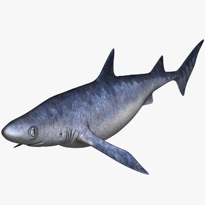 shark animal fish 3D