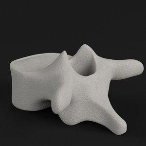 thoracic vertebra model