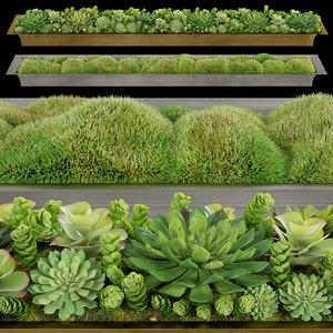 3D corona moss succulents