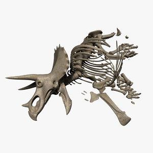 triceratops bones 3D model