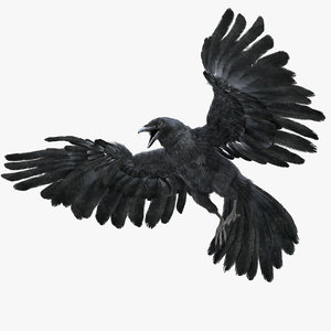 realistic crow rigged model