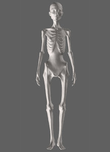 anorexic female 3D model