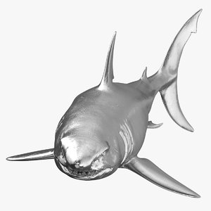 great white shark silver 3D model
