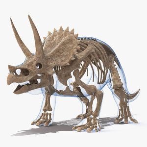 triceratops fossil standing pose 3D model