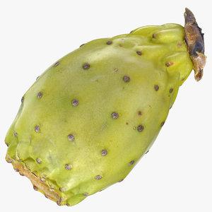 cactus fig 03 3D