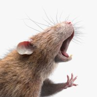 Rat Fur Rigged 2