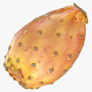 cactus fig 05 3D