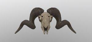 sheep skull animal 3D model