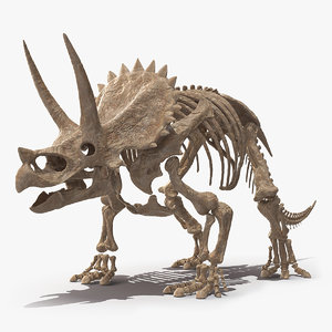 3D triceratops skeleton fossil