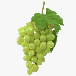 bunch green grapes 3D