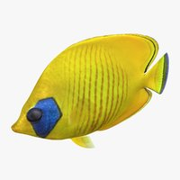 3D model bluecheek butterflyfish rigged