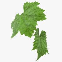 grape leaves dew plant model