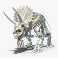 3D triceratops skeleton walking pose