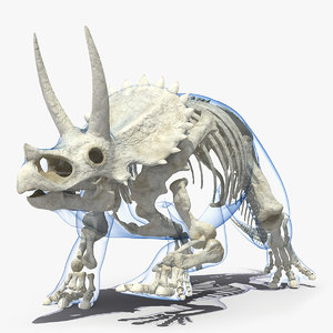 3D triceratops skeleton transparent skin model