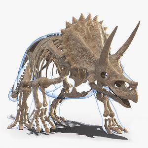 triceratops fossil walking pose model