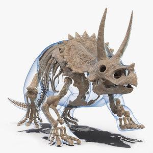3D triceratops skeleton fossil transparent