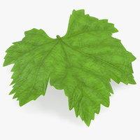 grape leaf 3D
