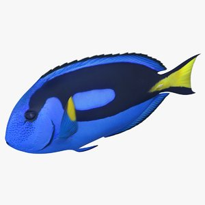 3D blue tang rigged model