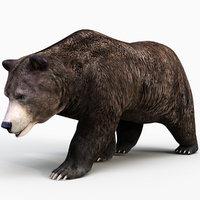 Brown Bear PRO