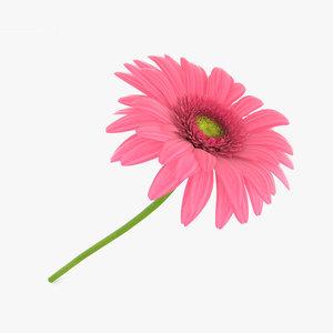 gerbera pink 3D