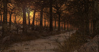 Sunset Path Forest
