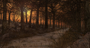 forest sunset path 3D