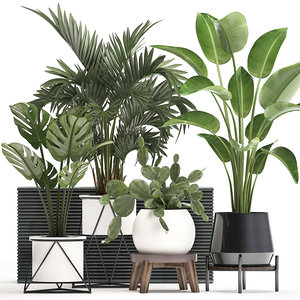 3D plants potted exotic