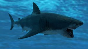 great white shark animations 3D
