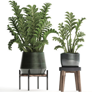 3D model zamioculcas exotic plants potted