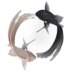 yin yang fish model