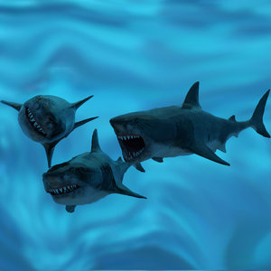 3D great white shark animations